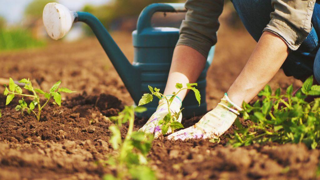 Benefits of Gardening